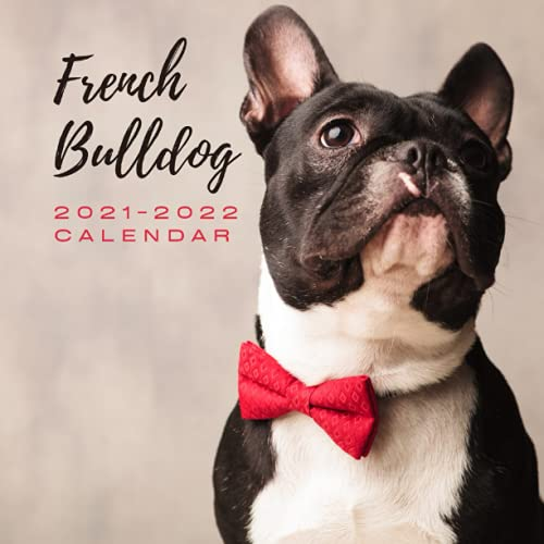 French Bulldog 2021 - 2022 Calendar: July 2021 to December 2022 | Photo Mini Calendar 2021/2022 | 8.5' x 8.5' | Month to View | 18 Months Photo ... Present for Colleague Coworker Manager Friend