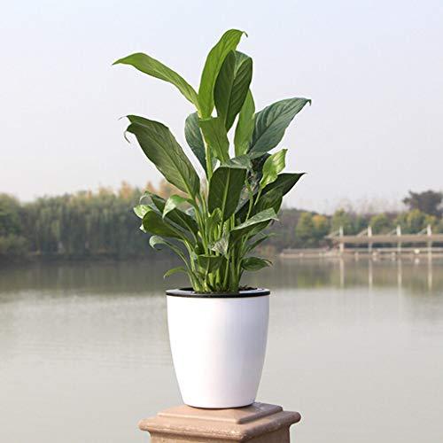 SHANG-JUN Fait à la Main Lazy Auto Irriguer Pot de Fleurs d'arrosage Automatique Absorption Planteur Pot Plante Verte d'eau Culture Flowerpot Auto suceurs Durable (Sheet Size : S)
