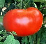 50 Better Boy Tomato Seeds - Graines JDR