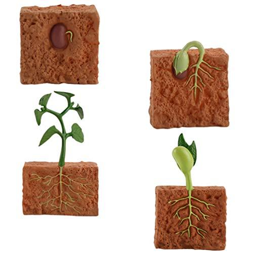 Toyandona 1 Set Lebenszyklus einer grünen Bohnenpflanze, Lernhilfe, Lernzyklus der Pflanze, Lernspielzeug, Modell Wachstumsstadion für die