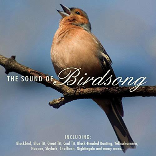Sedge Warbler (Birdsong)