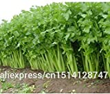 Imported seeds Item package quantity: 1 Sedano secco semi -delicious vegetali, pr di circa 50 particelle più basso nei aliexpress !!! All pictures shown are for illustration purpose only. Actual product may vary due to product enhancement Satisfacto...