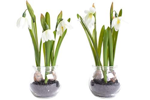 Nova-Nature künstliche Frühlingsblume im Glas (2 Stück) (Schneeglöckchen)