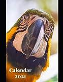 "Parrot Animals Calendar 2021: Weekly Planer Logbook Wildlife Diary Gift Todo Memory Book Budget Planner Hobby | Men, Woman, Girls & Boys | 8.5"" x 11"" (Animals Calendars 2021)"