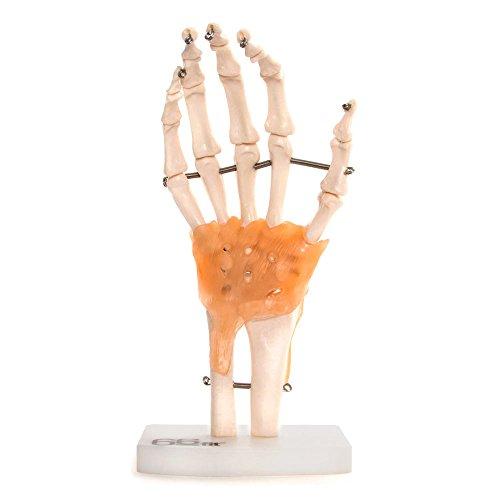 66Fit Human - Protección de mano