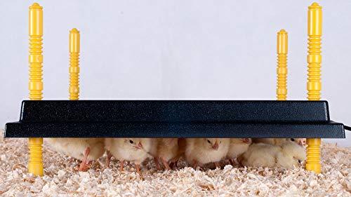 Olba Comfort Wärmeplatte 30x30cm für Küken, 22W/ 220-240V - 3