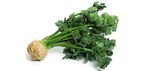 20 graines semences celeri rave goliath facile a eplucher se conserve