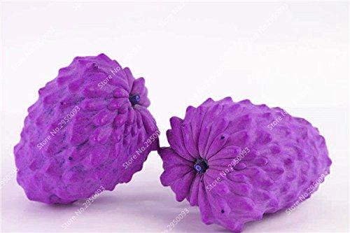 10pcs/sac de sucre rares Graines Bonsai Annona squamosa Plante en pot tête Fruit de Bouddha Crème anglaise Planta Decor Garden 10