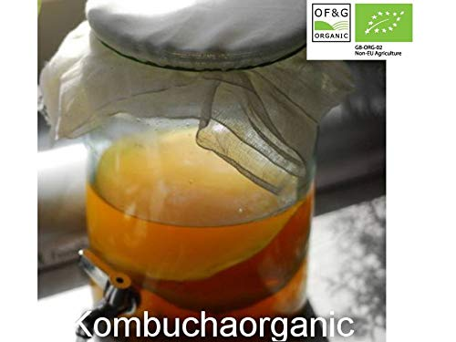 Kombucha-Pilz Kombucha Scoby/Pilz von Kombuchaorganic® Kombucha-Kultur, Anfänger-Set zum Selbermachen von Kombucha Getränk