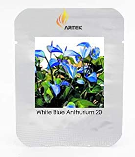 種子パッケージ: BELLFARM盆栽100%真バラエティR Differtアンスリウムの花ハーディ高い発芽-100pcs /パック:E3243 X T3