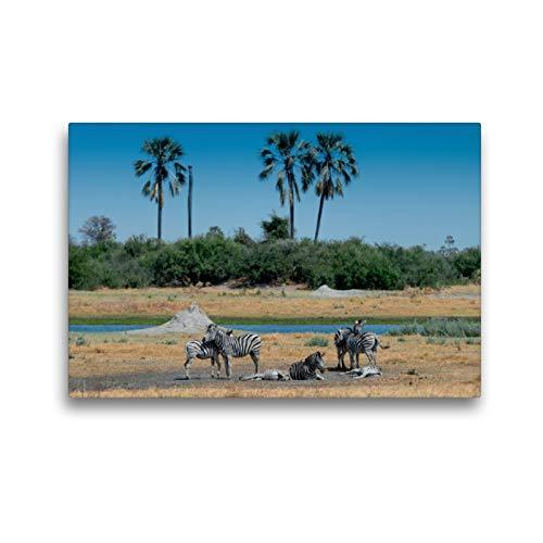 Calvendo Premium Lienzo de 45 cm x 30 cm Horizontal, cebras en el río Nqoga, Moremi Game Reserve Imagen sobre Bastidor, Lienzo de impresión Natural