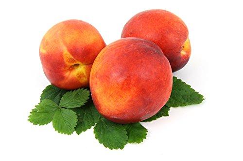Pfirsiche gelb frisch, große Früchte 10 Stück Packung