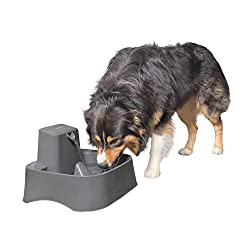 Large Water Fountain for Dogs