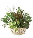 Sympathy Condolences - Same Day Sympathy Flowers Delivery - Sympathy Flower - Sympathy Gifts - Send Online Sympathy Plants & Flowers