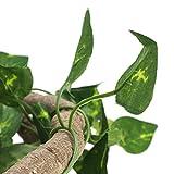Cuque Reptile Vine Reptile Flexible Branch, Reptile Climbing Branch, para Camaleones lagartos(Large 3m Rattan + Green Leaf)