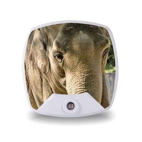 Luz de noche LED enchufable con sensor automático de anochecer a amanecer,elephant at zurich zoo,para pasillo, dormitorio, escalera, etc.