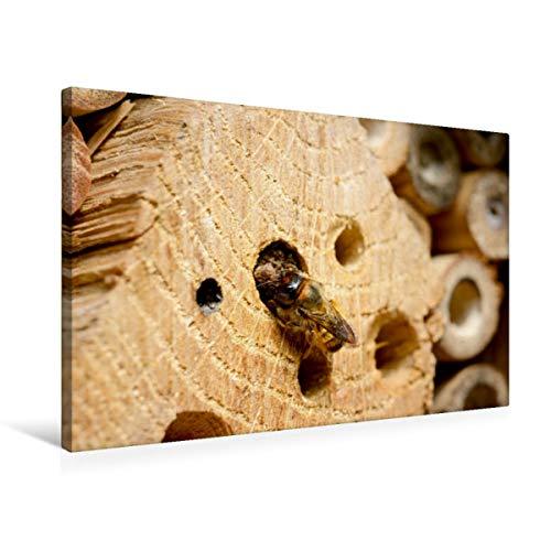 CALVENDO Premium Textil-Leinwand 75 x 50 cm Quer-Format Wildbienen in der Natur. Mauerbiene beim Verschließen des Nestes, Leinwanddruck von Anja Frost