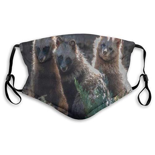 ZHENJIL Face Cover Pelz Waschb?r S?ugetier Hund Nah schauende Tiere Wildlife Carnivore Sturmhaube Wiederverwendbare Anti-Staub-Mund-Bandanas mit 2 Filtern