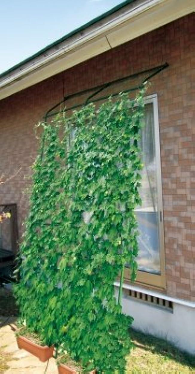 両方許容単調な【転倒防止パーツ付 】DAIM 緑のカーテン アーチ型 伸縮立掛けタイプ 180cm幅×高さ190~340cm(直立時)