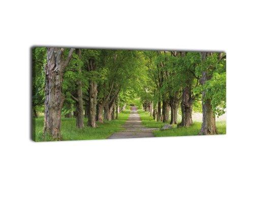 wandmotiv24 Leinwandbild Panorama Nr. 295 Sommerallee 100x40cm, Keilrahmenbild, Bild auf Leinwand, Strasse Bäume Sommer