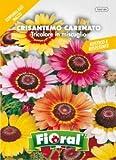 Sementi da fiore di qualità in bustina per uso amatoriale (CRISANTEMO CARENATO TRICOLORE IN MISCUGLIO)