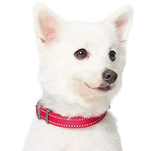 Umi. Essential Pastel - Collar para Perros M, Cuello 37-50 cm, Collares Ajustables para Perros (Morado)