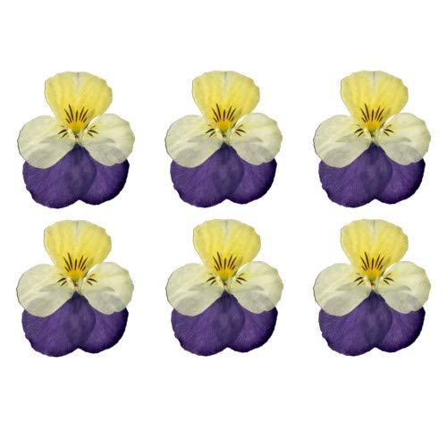 食べられる押し花 ドライエディブルフラワー ビオラ(白紫) 100枚入り 食用花 ドライフラワー 有限会社トム(omtmb7237)