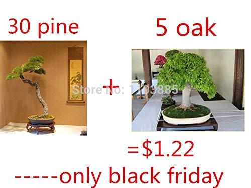Pinkdose mejores bonsai 30 PC/bolso japonés de árboles bonsai de pino y roble de 5 bonsai rara para el regalo para el jardín de