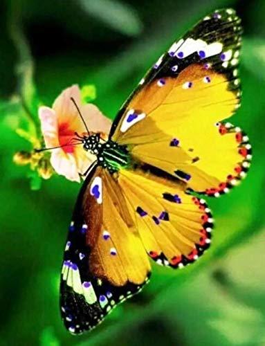 YHKTYV Hermosa Mariposa 300 PCS Rompecabezas de Madera Aliviar Estrés Juego Cada Pieza es única Brain Challenge Regalo Personalizado para niños Amigos
