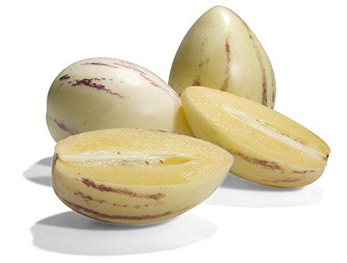 Semillas de Pepino Dulce pera del melón Solanum Muricatum Fruit 10 PCS exóticos! ¡RARO!