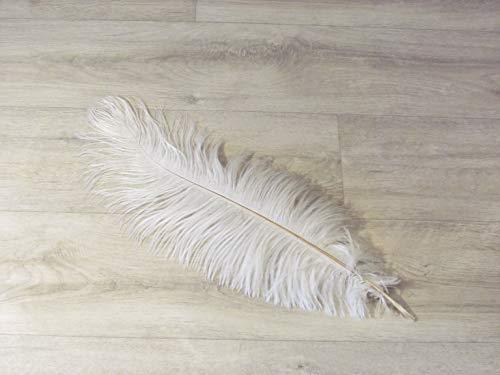 AVIARIUM weiß gefärbte Straußenfeder 50-60 cm, 1 Stück (viele weitere Farben und Größen, Händler aus Deutschland)