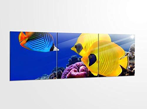 Acrylglasbilder 3 Teilig 150x50cm Fische gelb Wasser Riff Ozean Meer_ Acrylbild Bilder Acrylglas Wand Bild Kunstdruck 14?5410, Acrylglas Größe 6:BxH Gesamt 150cmx50cm
