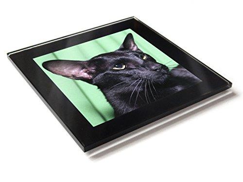 Oriental schwarz Katze Kätzchen Premium Glas Tisch Untersetzer mit Geschenk-Box
