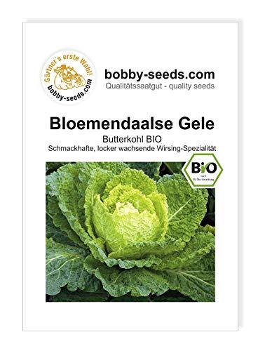 Bloemendaalse Gele Butterkohl BIO von Bobby-Seeds Portion