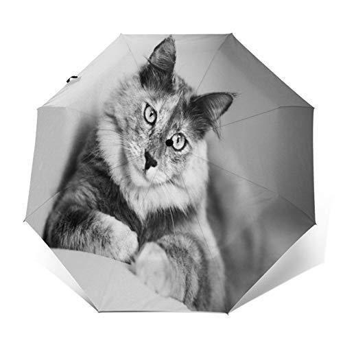 TISAGUER Paraguas automático de Apertura/Cierre,Cuadro de Arte en Blanco y Negro,Gato en el sofá,Paraguas pequeño Plegable a Prueba de Viento