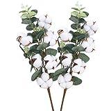 DWANCE 2PCS 45cm Getrocknete Baumwolle Natürliche Trockenblumen Baumwollzweig Deko Kunstpflanzen Eukalyptus Plastikpflanzen Deko für Tischdeko Vase Hochzeit Zimmer Winter Dekoration