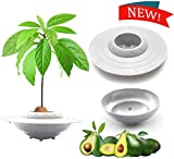 tEEZErshop Avocado Pflanzschale Kit(Mit Grau Unterseite Platte),Das Beste Garten Samen Starter...