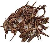 GEOPONICS SEMI Akkalkadha Muli - Anacyclus radice piretro semi (1 pacchetto)