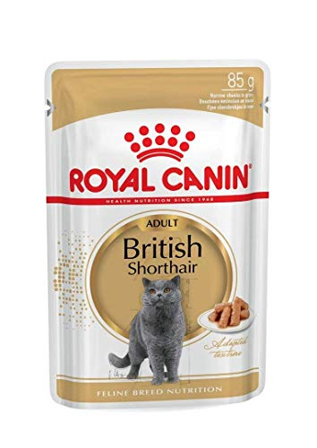 ROYAL CANIN ish Shorthair, 1er Pack (1 x 1.02 kg)