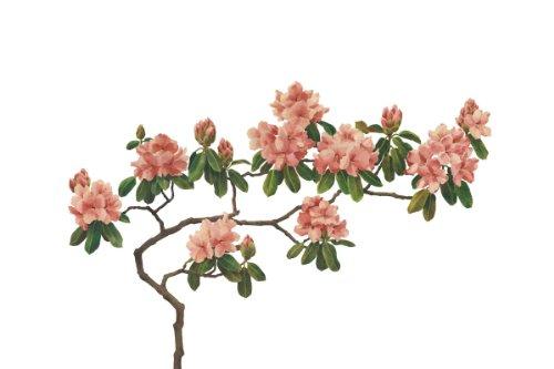P030501-8 Foto-Vliestapete Magnolienblüten Rosa