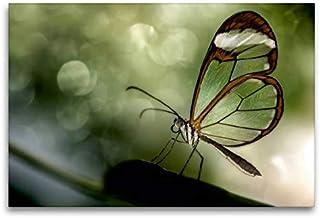 Premium Textil lienzo 120 cm x 80 cm horizontal, mariposa – alas de cristal (Greta oto) – Imagen sobre bastidor, imagen listo sobre verdad... y delicadas criaturas (CALVENDO);CALVENDO Animales