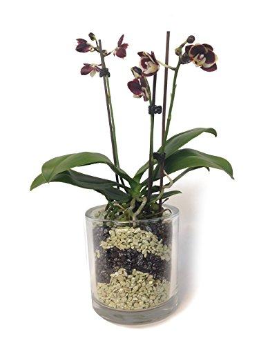 Colomi Orchideengranulat 4 Liter