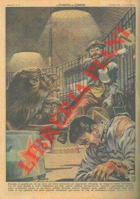 Clown salva la vita a un domatore aggredito da sei leoni.