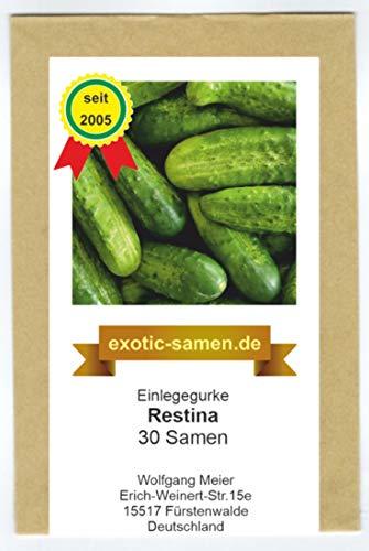 Einlegegurke Restina F1 Hybride - mehltauresistent - bitterstofffrei - 30 Samen