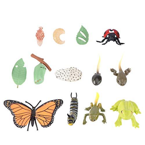 NUOBESTY 3 Juegos de Modelos de Ciclo de Vida Animal Mariposa Mariquita Rana Etapas de Vida Figuras Niños Aprendiendo Enseñanza Ciclo de Crecimiento de Insectos Modelo de Juguete