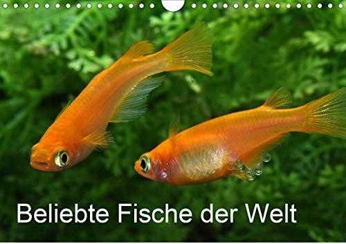 Beliebte Fische der Welt (Wandkalender 2021 DIN A4 quer)