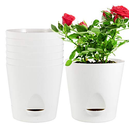 Self Watering Pots,Laerjin 8 Pack 5.5 Inch African Violet Pots with High Drainage Deep Reservoir, White Self Watering Planter for Indoor Plants, Ocean Spider Plant, Orchid