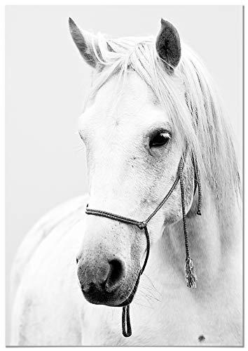 Panorama Aluminium Frame Paard Box 35x50cm - Gedrukt in hoge kwaliteit Witte Dibond Aluminium - Animal Frames - Foto's Decoratie Lounge - Moderne slaapkamerframes - Zen Frames