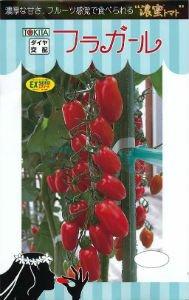 【フラガール】ミニトマトの種 (8粒)