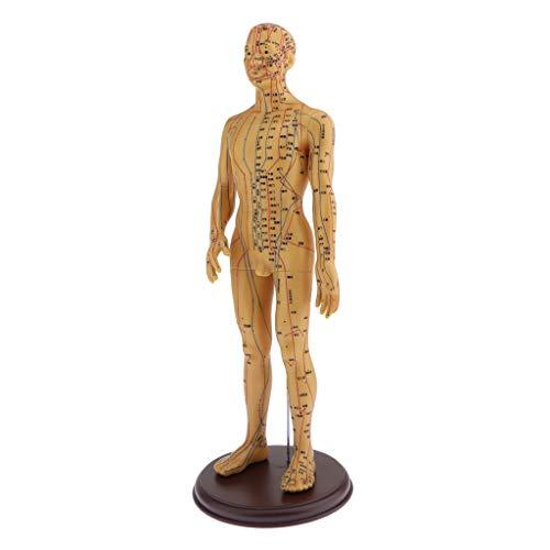 CUTICATE Männliches / Weibliches Akupunkturmodell, Meridianmodell mit Genaue Akupunkturpunkte - Männlich, Weich